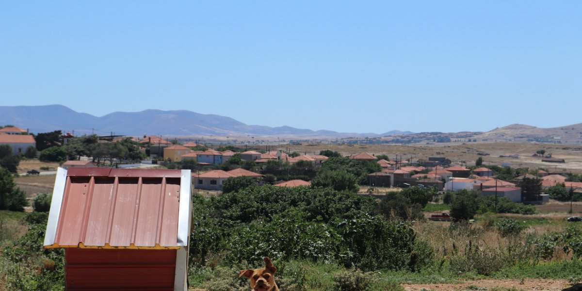green nature, buildings with tiles, red dog house, Lemnos