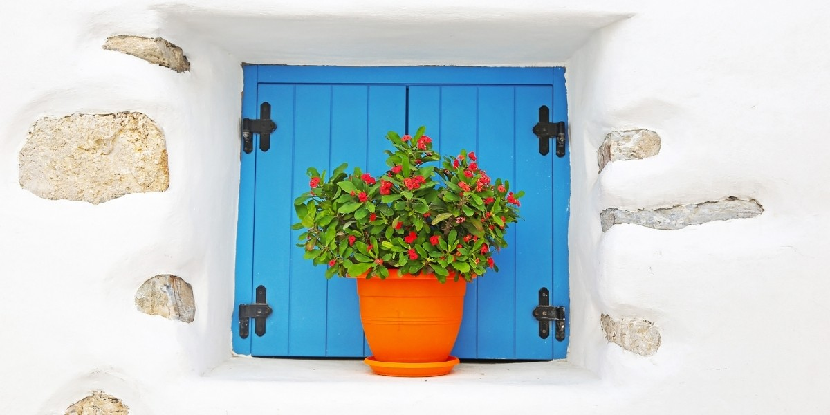 colourful flower pot and window