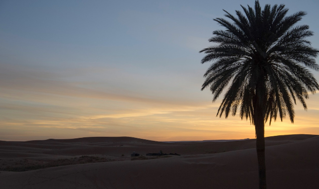 Palm tree in the Desert - Morocco - Ferry tickets from Spain to Morocco