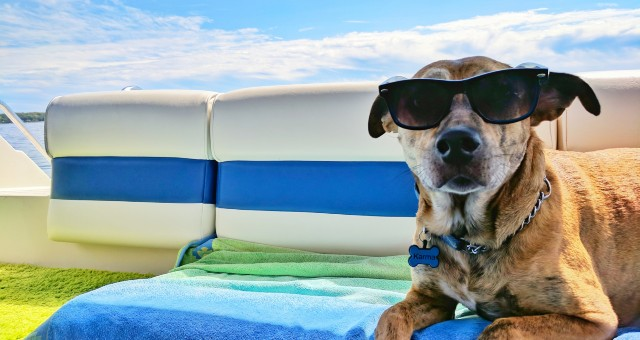 dog with sunglasses, blue and white, pet on ferries, ibiza to formentera by ferry