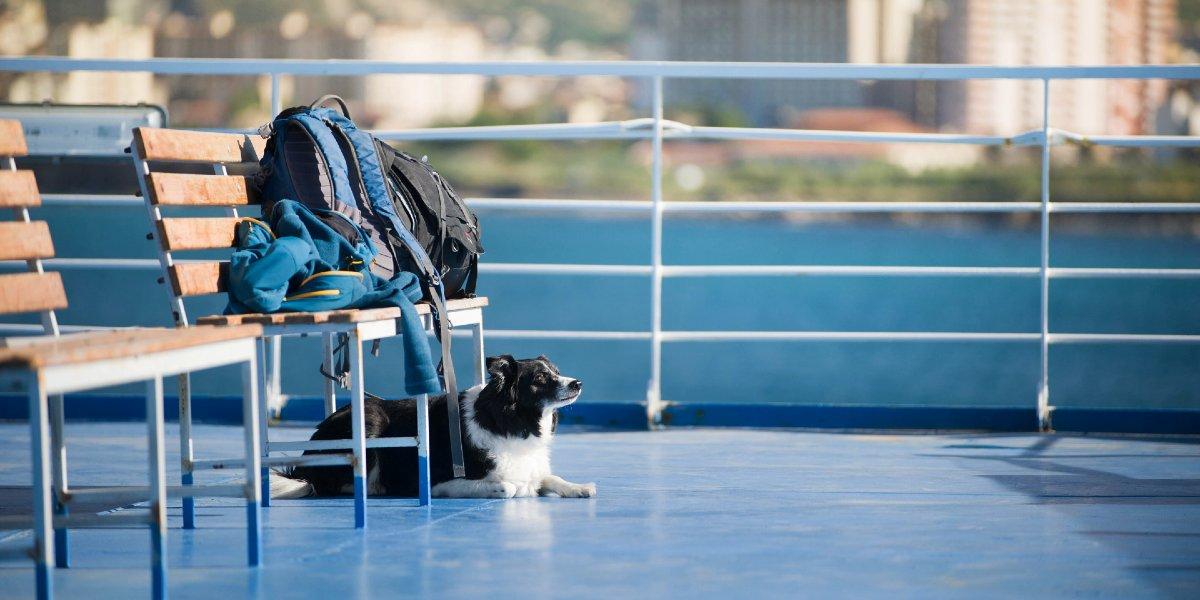 Cane sdraiato sul ponte della nave