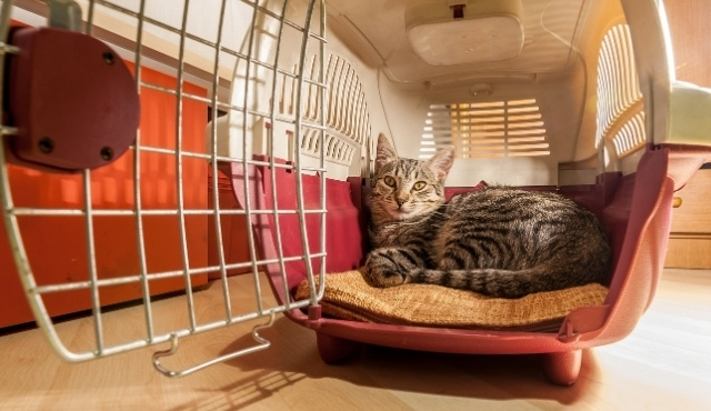 Cat comfortably sitting in a pet carrier lined with a soft mat