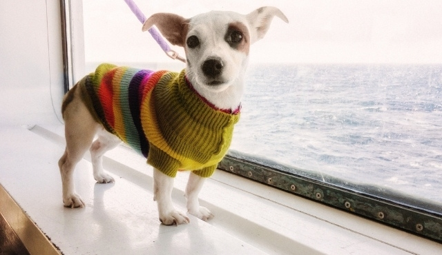 Small dog sitting by the window on board the ferry in Spain