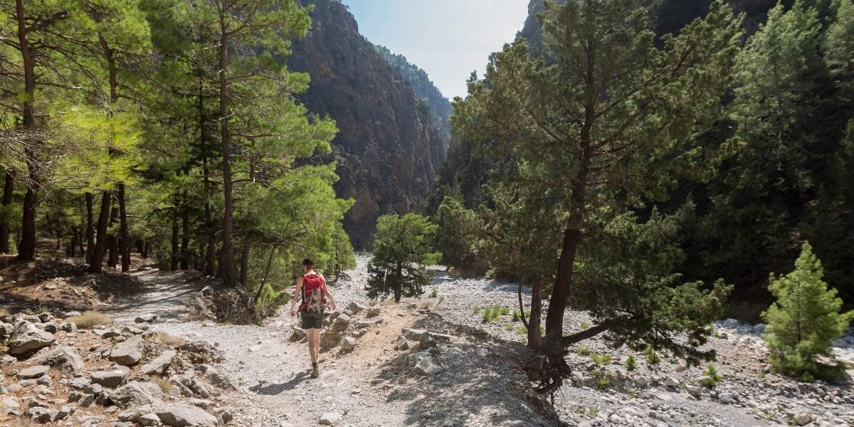Forest in the gorge of Samaria in Crete