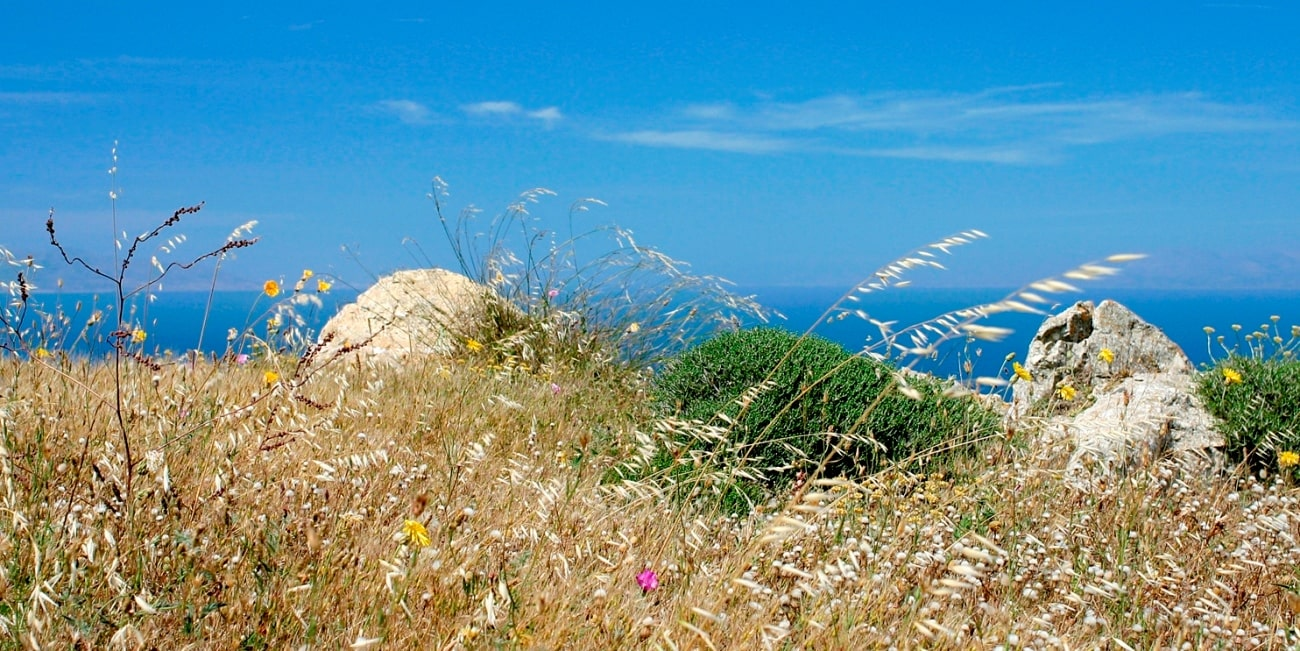 Flowers on a seaside hill in Sikinos