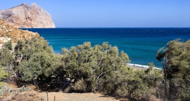 Roukounas beach with tamarisks in Anafi