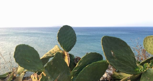 Cactus plant in the coast of Anafi island, Cyclades, blue calm sea, horizon, sunlight, summer holidays, ferry tickets
