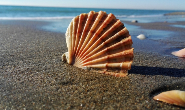 A shell on a beach outside Civitavecchia in Rome, holidays in Italy, ferry tickets