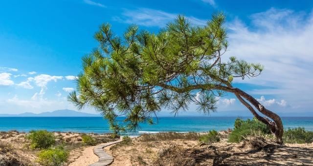 Παραλία κοντά στην Κυλλήνη, αλμυρίκι, δέντρο, μπλέ θάλασσα, σύννεφα, δρομάκι, κύματα