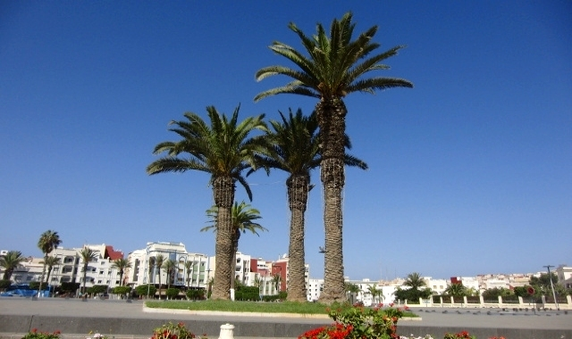 al hoceima, square, city centre, palm trees, buildings, morocco
