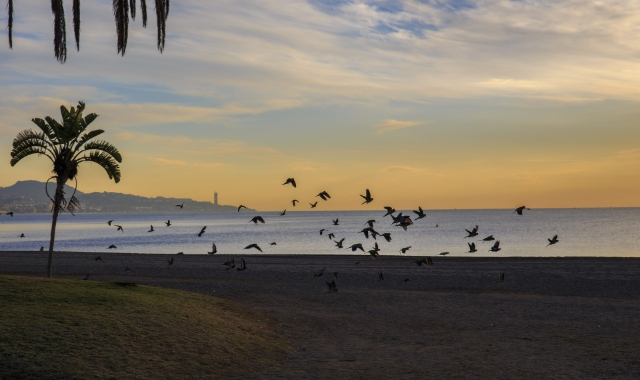 Beach close to Malaga, sunset colours, birds, palm trees, port, ferry tickets