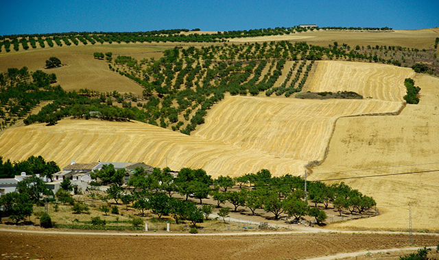 Hills, country houses, trees and nature in Motril, Andalusia, holidays, ferry routes to Melilla and Morocco