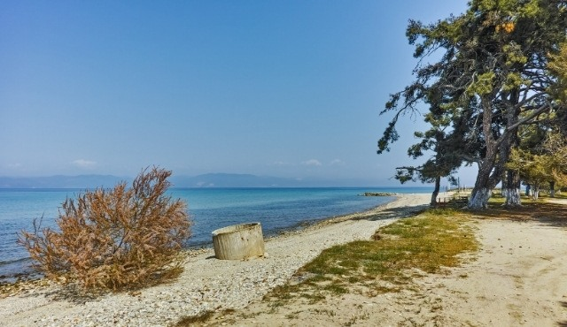 Ormos Prinou: remote beach in Thassos with pine trees and sand