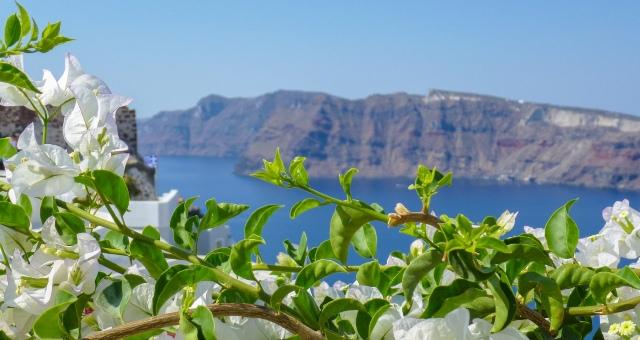 θέα στη Σαντορίνη απο Θηρασιά, λευκά λουλούδια, φύλλα, θάλασσα