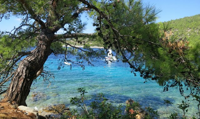 green tree, crystal blue waters, beach in Bodrum, nature, ferry routes
